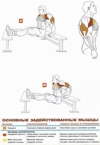 Тренировка для мышц рук в домашних условиях